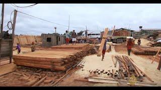 عالم الجزيرة - البيرو.. تجارة الأخشاب الفاسدة