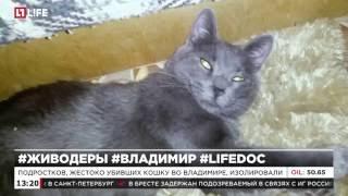 Подростков, жестоко убивших кошку во Владимире, изолировали