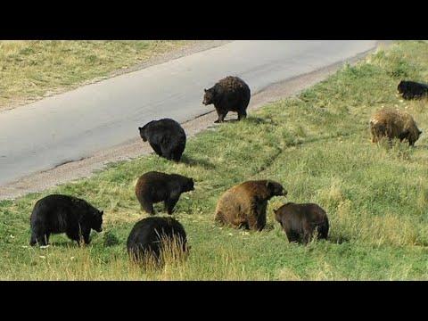 Bear Country USA Drive-Thru | Rapid City, SD