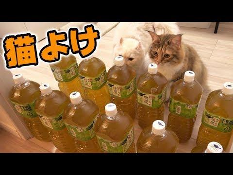 猫よけにペットボトルは無意味だった!?