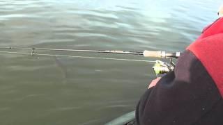 Рибалка в Ташаре (д. Обська) або як Ігор прое...ал щуку