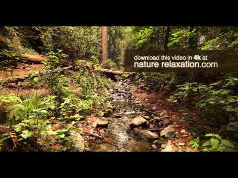4k Screensaver: Redwood Forest Stream in Big Sur (ULTRA HD) Digital Download
