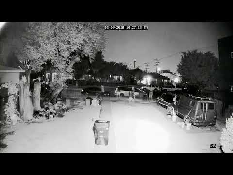 Dog shot and killed in south LA
