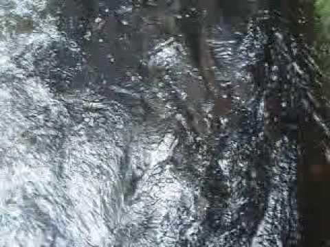 Nehalem river coho swimming up fish ladder youtube for Nehalem river fishing