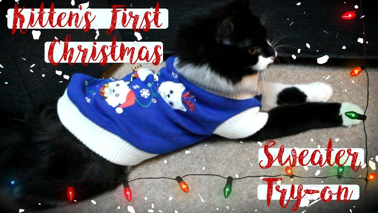 Putting My Kitten in a Christmas Sweater - YouTube