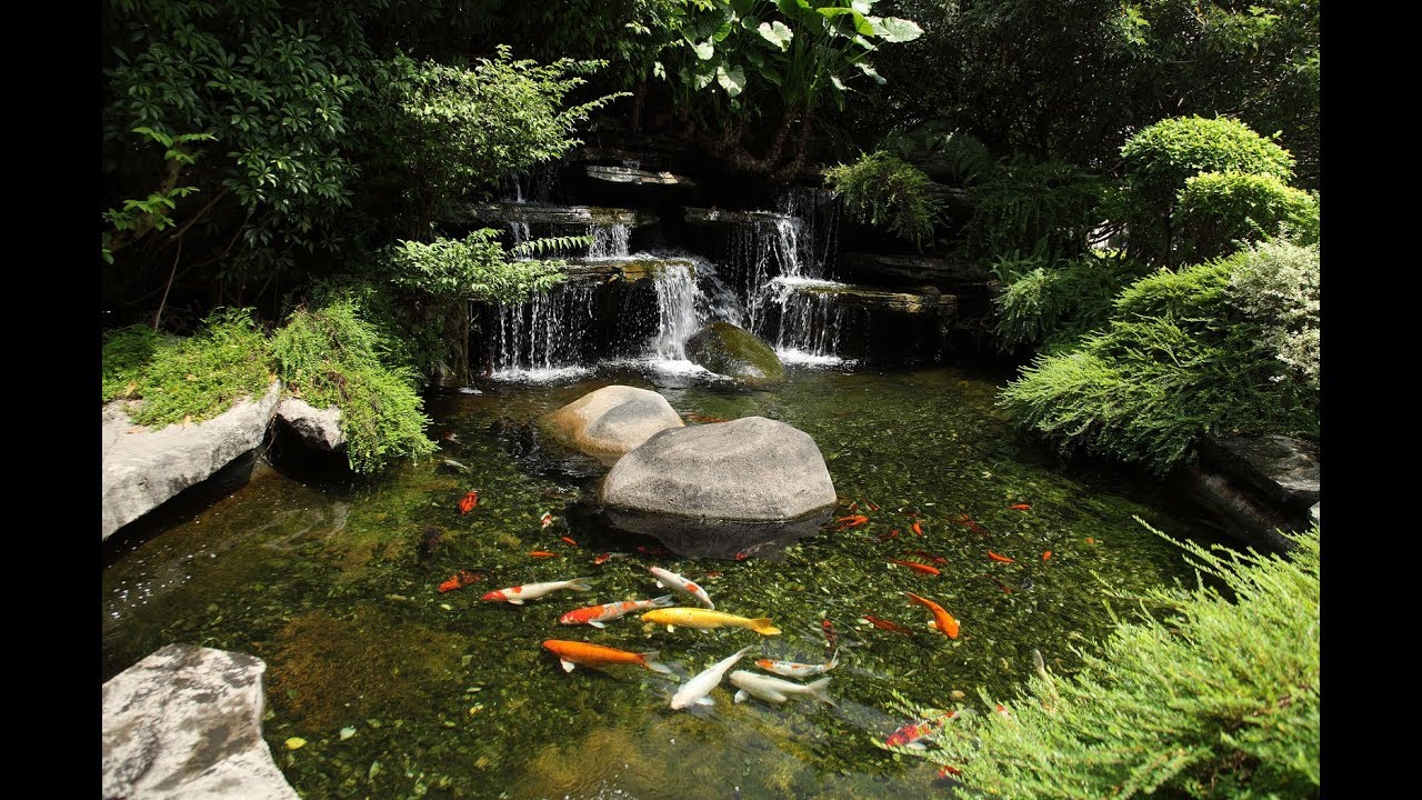 Koi fish pond garden design ideas youtube for Koi pool water gardens blackpool