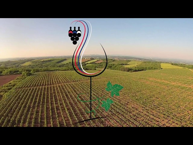Predsednik Srbije Aleksandar Vučić zapratio je sve vinarije pred događaj Sv. Trifun na Savkom Vencu