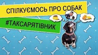 Канал про ВИХОВАННЯ та ДРЕСИРУВАННЯ СОБАК - DoggyPoet