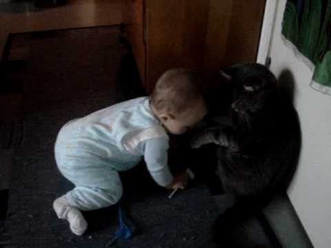 baby vs  cat fight