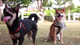 DoDo Dog play with Funny Style | DoDo Smart Dog | Pet Lover