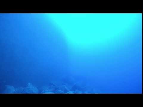 Diving Lanzarote - 33