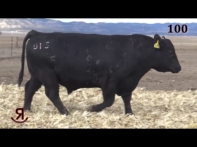 Reverse Rocking R Ranch Lot 100