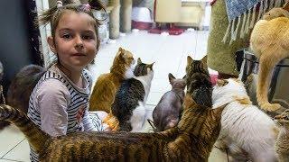 Республика кошек и котов в Санкт-Петербурге