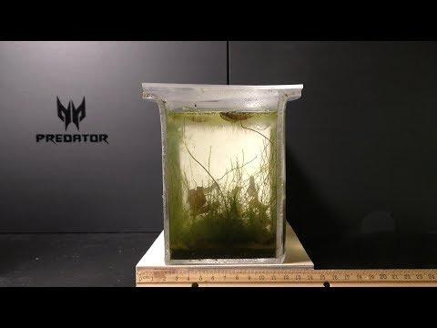 Simple Self Sustainable Aquarium