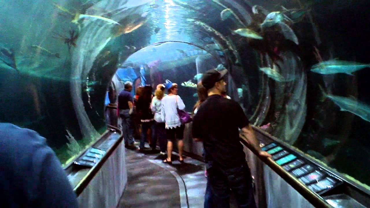 San Francisco Bay Aquarium Youtube