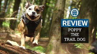 Poppy The Trail Dog Review - Compact, Short-Travel Enduro Hound