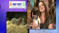 PET CITY HOUSTON - YouTube