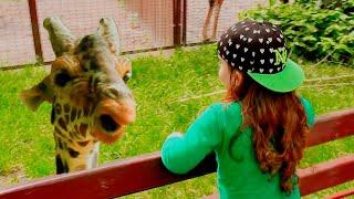 Давид едет в зоопарк и кормит животных (0+)