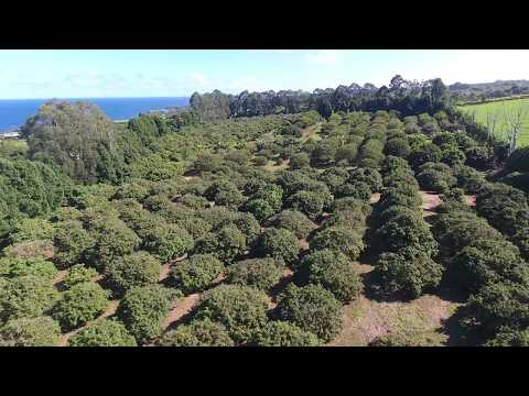 Tropical Fruit Orchard! Beautiful Prime 14+ Acres!