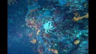 Chorwacja - Pisak 2010 miejsca do nurkowania
