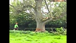 Mick Lynch & Son Tree Surgery Services