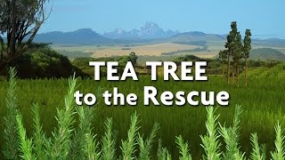 Tea Tree to the Rescue