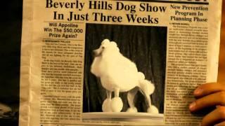 Un chihuahua en Beverly Hills  2  - Trailer Español HD