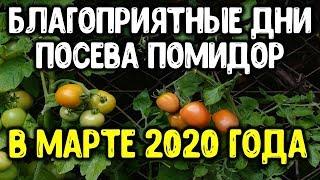 Когда садить томаты в марте 2020 года? Сеем семена помидоров на рассаду в благоприятные дни марта.