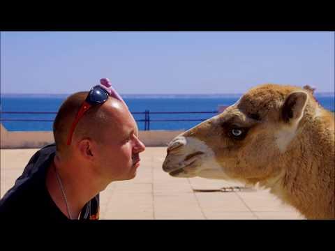 Страна которой Нет, НО ТАМ ЛЮБЯТ ПУТИНА и РОССИЮ - Африка Западная Сахара верблюды, море, серфинг