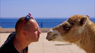 Страна которой Нет НО ТАМ ЛЮБЯТ ПУТИНА и РОССИЮ - Африка Западная Сахара верблюды море серфинг