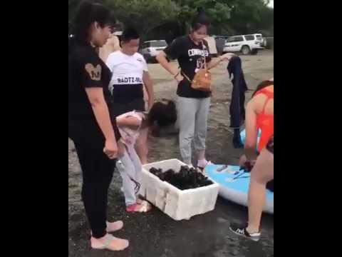 Китайские туристы массово вылавливают морепродукты в двух бухтах на Русском острове
