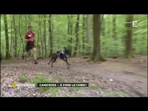 Courir avec son chien, c'est du sport !