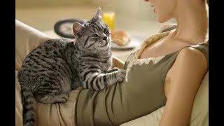 Когда узнаете, зачем коты топчут нас лапами, будете поражены