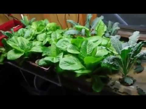HOME MADE HYDROPONICS SYSTEM EASILY VIDEO COMPILATION