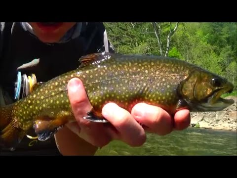Fly Fishing Kettle Creek Potter County PA 2017