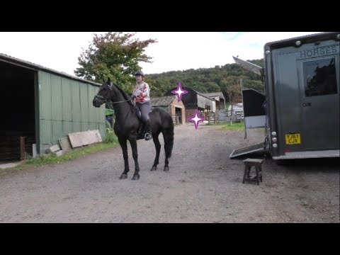 Friesian Horse on a fun ride with lots of great cantering places