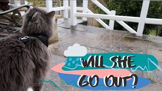 Cat Wants To Go Out In The RAIN | Will She Go OUTSIDE?