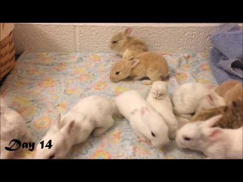 Harlequin Baby Bunnies Days 1-25