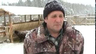 Домашняя ферма   Овцеводство