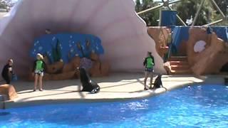 Miami Seaquarium Sea Lion Show