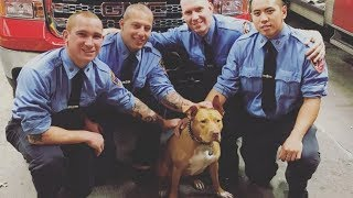 Pit Bull Rescued From A Crack House Gets A New Chance With An Unlikely Family