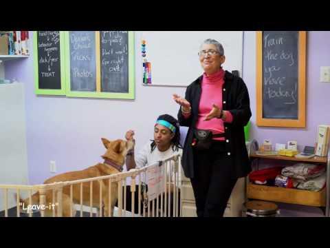 pumpkinpups-dog-training-classes