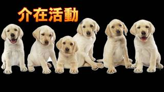 動物介在活動(AAA活動)~穴吹動物看護カレッジ~ thumbnail