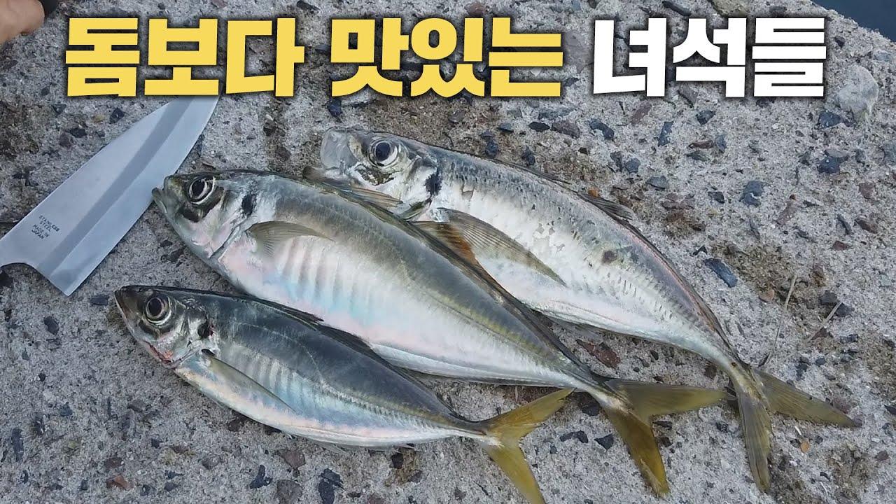 웬만한 돔보다 훨씬 맛있는 물고기 - 초절임초밥과 회