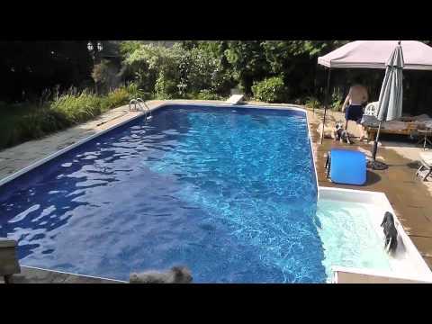 Havanese Kat & Roxie Swimming