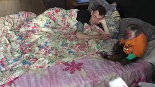 Мотя проснулась ( домашние макаки)