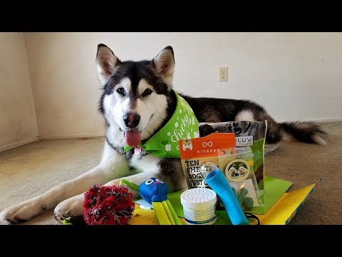 Tonka Unboxes His Pet Treater Box!