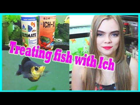 HOW TO TREAT FISH WITH ICH / ICK ( WHITE SPOT DISEASE )