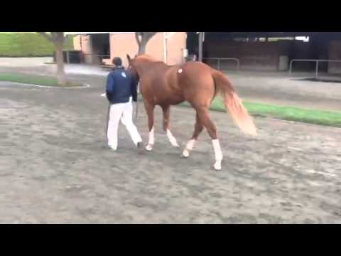 Lucky Pulpit colt Bought by West Point Thoroughbreds Racing Partnerships