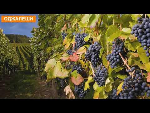 10 знаменитых грузинских вин